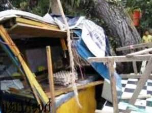 Lagi, Dua Pohon 'Raksasa' di Tanjungpinang Tumbang