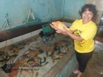Pengen Ikan Mas Segar, Hubungi 081372866632