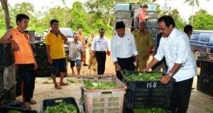 Nurdin usai meninjau lokasi perkebunan sayur di Wacopek, Bintan, Senin (16/1)