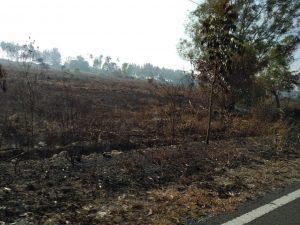 Salah satu lahan yang hangus terbakar.