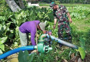 Sertu Ritonga tampak tengah membantu petani menyedot air, untuk mengairi lahan persawahan.