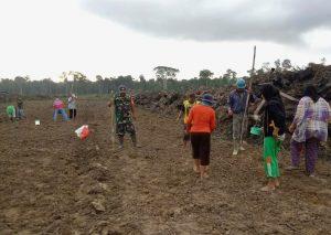 Serda Saifullah Torang bersama Poktan Krida Tani Desa Semedang, saat menanam padi.